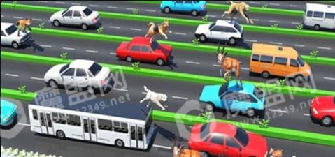 公路上的动物