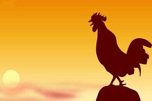 小鸡鸡快跑