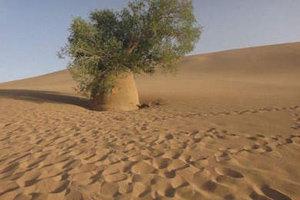 沙漠大战僵尸