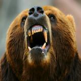 饑餓的攻擊熊